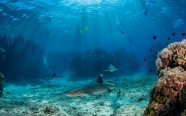 Awesome Adventures Fiji: Ultimate Encounters Package: Snorkel with Sharks!